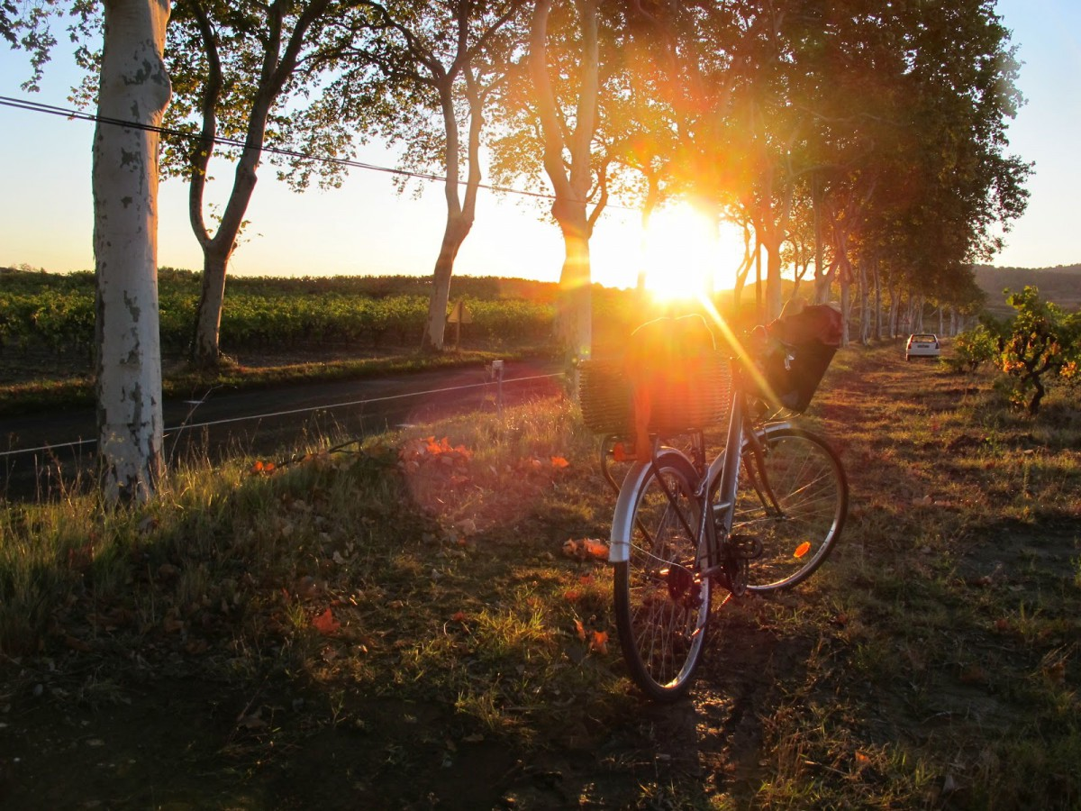 sunrise bike